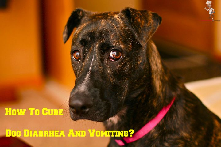 Cure Dog Diarrhea and Vomiting