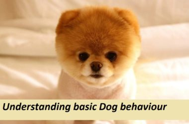 Understanding basic Dog behaviour