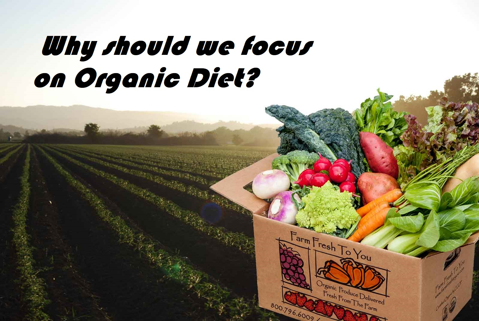 Why should we focus on Organic Diet?