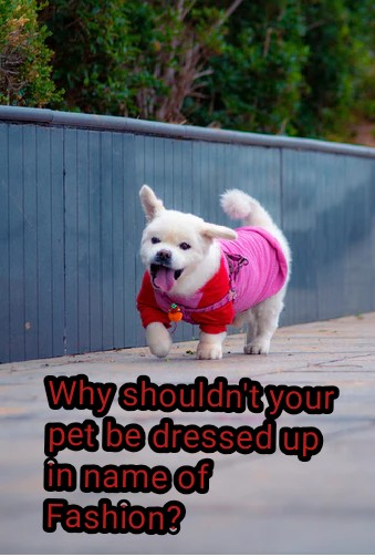 Why shouldn't your pet be dressed up