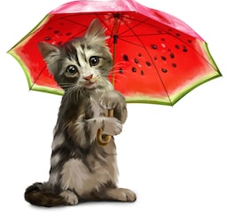 Pets during Monsoons