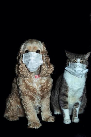Pets during Corona