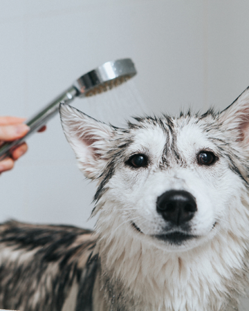 Pets and Hygiene