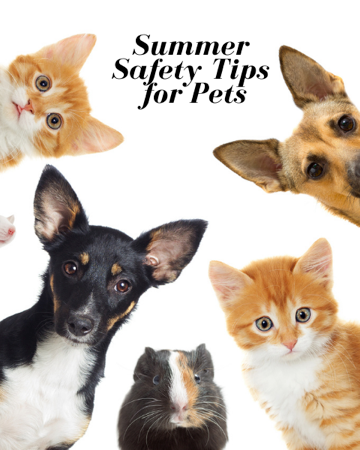 Safety tips for pets